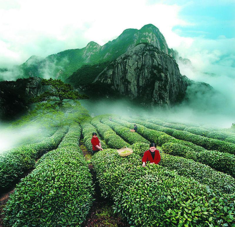 Три красивые легенды о происхождении чая